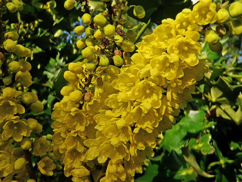 Plant of the Week- March 23