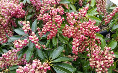 Plant of the Week- March 9
