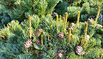 Plant of the Week- April 19