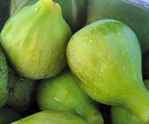 Growing Figs in the Northwest