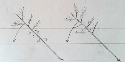 begin bending to horizontal