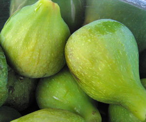 Multi-variety fruit trees and other musings