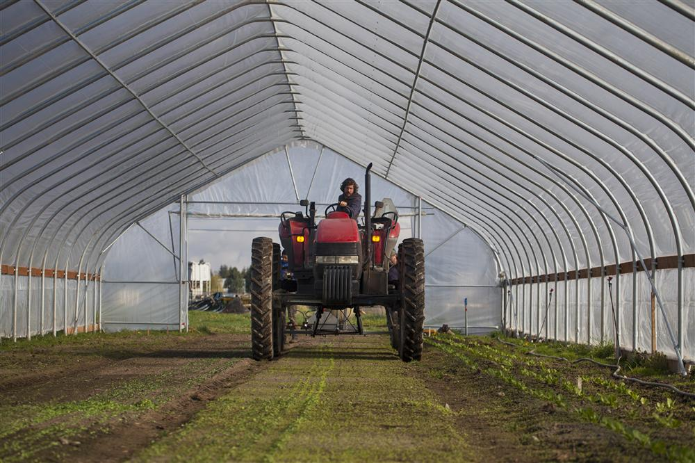 Tractor in high tunnel