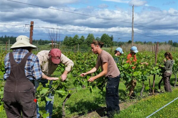 Summer Vineyard Workshop