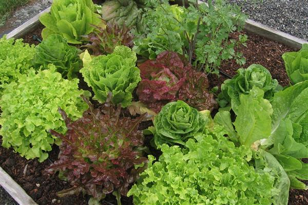 Learn to Grow a Vegetable Garden