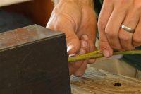 Softwood Cuttings