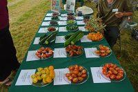 Summer Harvest Day