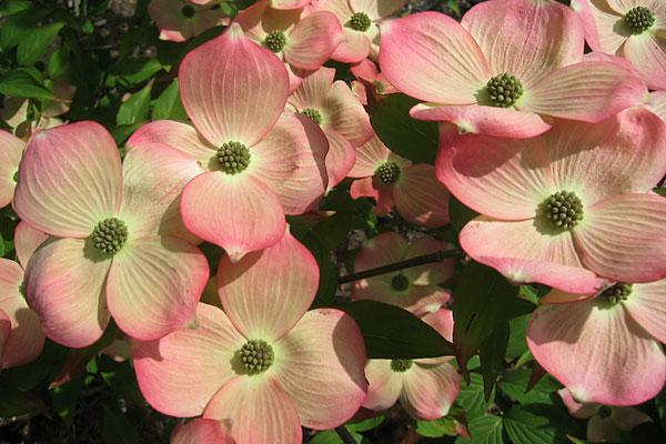Flowering Garden Trees
