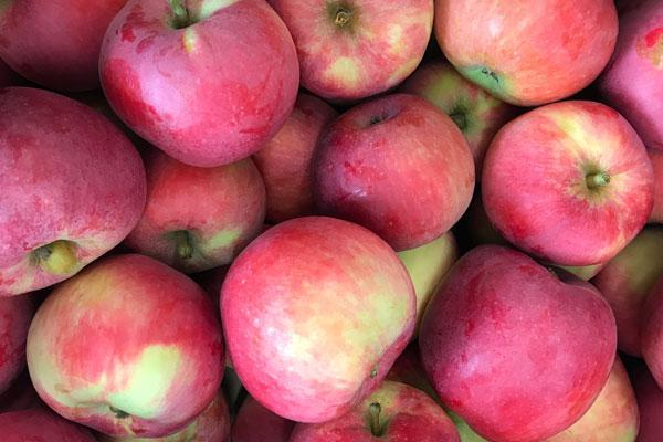 Scab Resistant Apple Trees