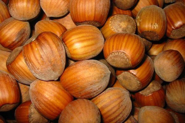 Dorris Hazelnut