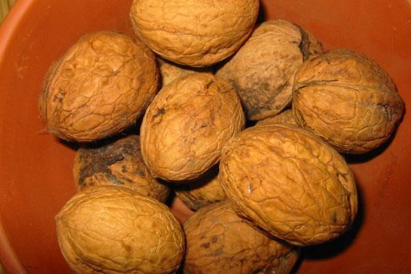 Cascade English Walnut