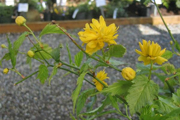 Plants that Tolerate Wet Soil
